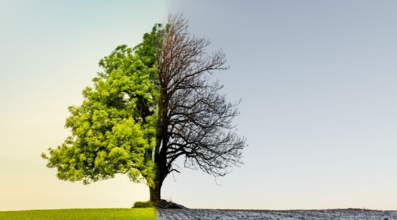 Climate Change – It's Everybody's Business!